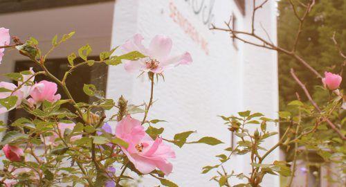 Die Rosen vor dem Haus