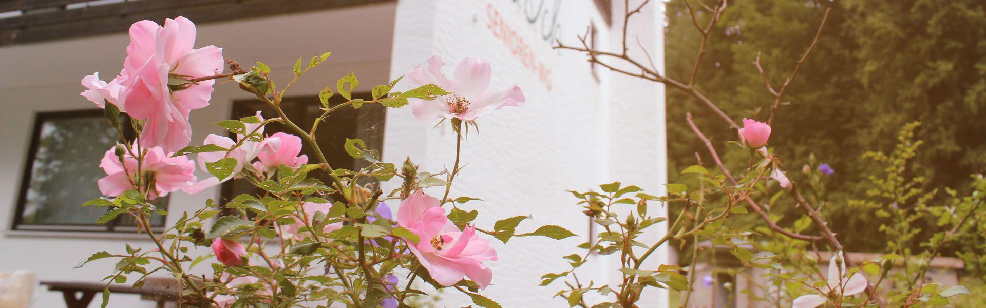 Rosen vor der Senioren-WG
